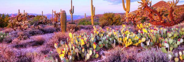El Desierto Sonorense es hablar de un lugar muy especial, fotogénico, y único en el mundo. Junto a sus hermosas y vistosas plantas nativas se convierte en nuestro tesoro regional, el cual todos los sonorenses y mexicanos debemos de apreciar, cuidar y sentirnos orgullosos.