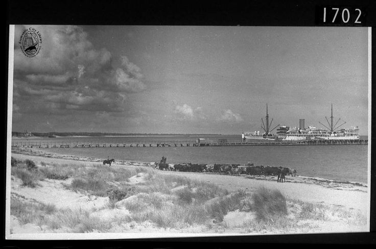 The ship Koolinda docked at Robb Jetty c1930. The jetty, extended in 1894, allowed cattle ships from the Kimberley to offload their cattle directly to the fields around the abattoirs at C.Y. O'Connor Beach.
