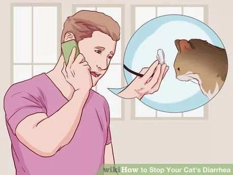 Stop Your Cat's Diarrhea Step 1