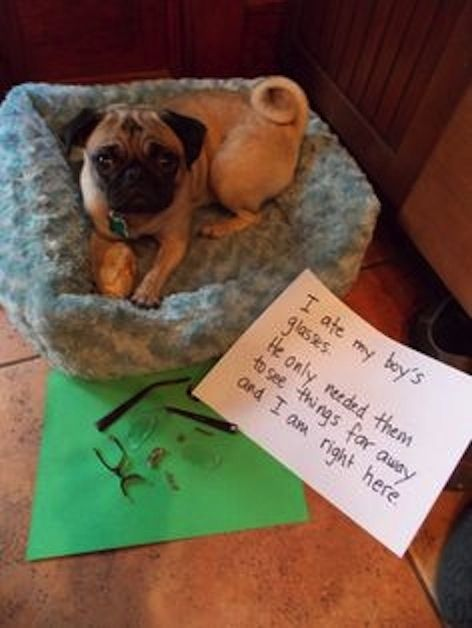 Fair point. | 23 Photos That Prove Pug Shaming Is The Best Kind Of Dog Shaming
