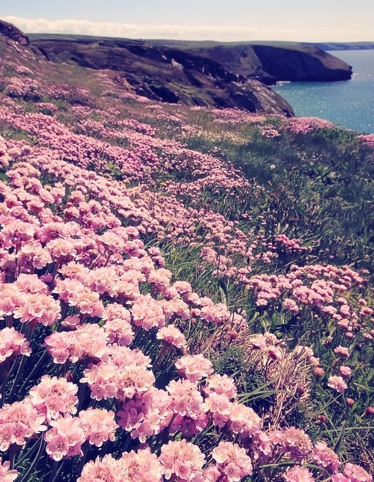 "Pigment Blog ""Doo Uap into Spring"" #Flowers #spring #california #coast"