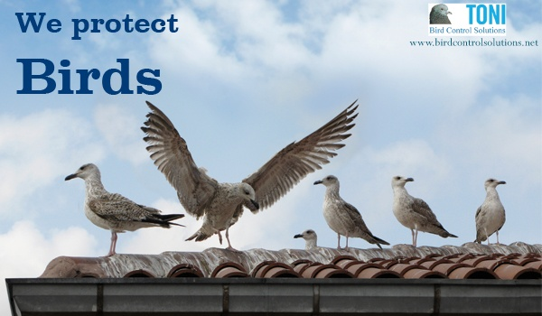 Bird control solutions provide Protection from birds with humanistic approach. Our techniques are unharmonious for birds & strictly follows laws of particular country. http://www.birdcontrolsolutions.net/en/05_birdprotection/index.php
