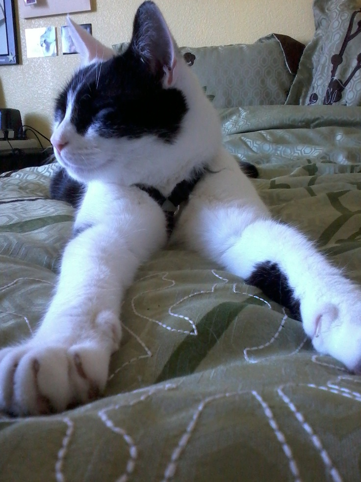 My handsome cat