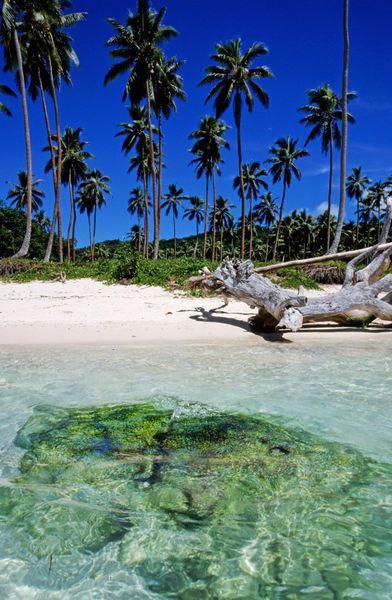 Coconut trees along Siviri Beach on the island of Efate, Vanuatu