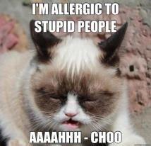 Grumpy Cat: Lemonade & Stupid People