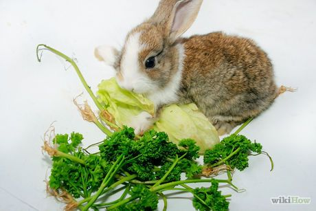 Raise a Healthy Bunny -- good info on diet, housing, neutering, and general care