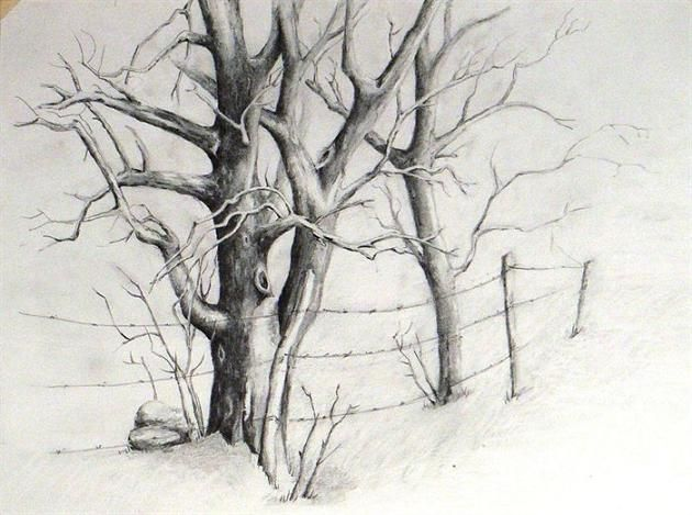 How to draw trees in pencil is a question by many of the beginners in pencil drawing. Trees demand a unique composition with branches and leaves.