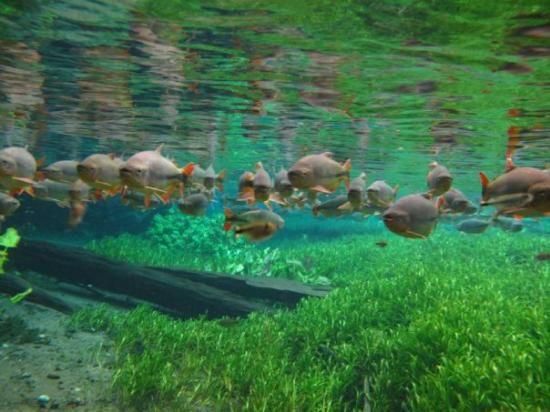 aquarium-natural