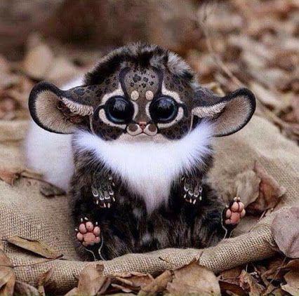 Ma questo non loconoscevo  Scimmia del sud est dell'Africa, Madagascar