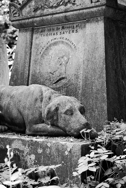 Dog at Highgate Cemetery, London. This cemetery is the setting for two recent novels - 'Her Fearful Symmetry' by Audrey Niffenegger (who wrote 'The Time Traveller's Wife') and 'Falling Angels' by Tracy Chevalier (who wrote 'The Girl With the Pearl Earring')