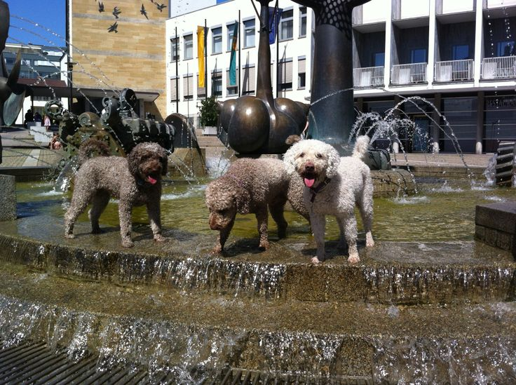 Anube, Wookiee and Hanka