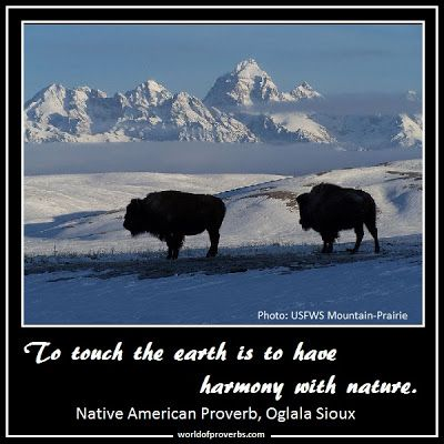 Famous Native American Quotes | Native American Proverb, Oglala Sioux [19076]