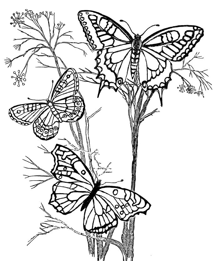 Flower Images For Butterfly Coloring Pages Adultsadult Flowersprintable Picturescolouring