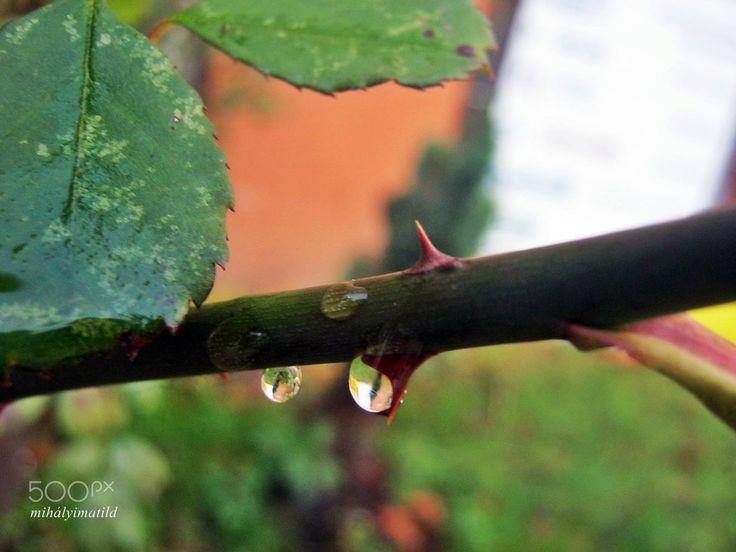 dewdrop - null