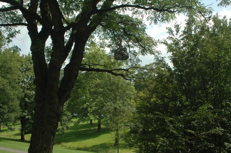 Boomsieraad - Maria Roosen (Oisterwijk, 1957) is bekend geworden met haar sensuele, fysieke kunstwerken waaronder het boomsieraad.  Van afstand zie je het al glinsteren als onderdeel van de boom wat er niet hoort.  De verboden vrucht? Nee, een sierraad.  Het refereerd aan aan oude vruchtbaarheidssymbolen en het menselijk lichaam.      Jaar: 2008  Plaats: John F. Kennedylaan, Sprengenpark  Tekst: Edward Butter