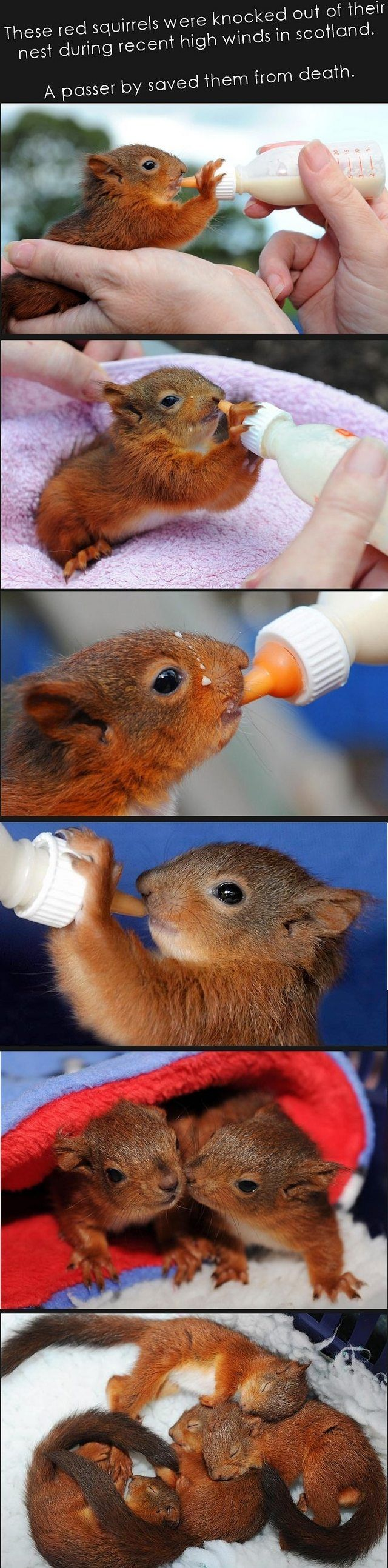 3956 best squirrel images on pinterest squirrels squirrel and a passer by saved these red squirrels from death during high winds imgur geenschuldenfo Choice Image