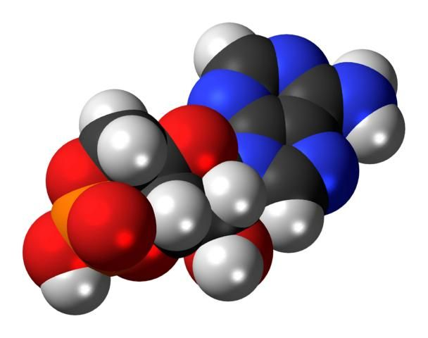 Cyclic-adenosine-monophosphate-Time and Life-Spiritual Interactions