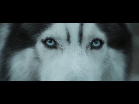 """Veja o clipe de """"Echo"""", nova música de Hardwell #Clipe, #Dj, #Vídeo http://popzone.tv/veja-o-clipe-de-echo-nova-musica-de-hardwell/"""