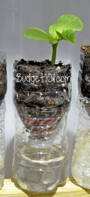 DIY Self Watering Planters- In honor of Earth Day, we'd like to share this simple do it yourself, homemade self-watering seedling and herb planter idea. This is an easy way to recycle plastic water and soda bottles. (Click on photo for tutorial)