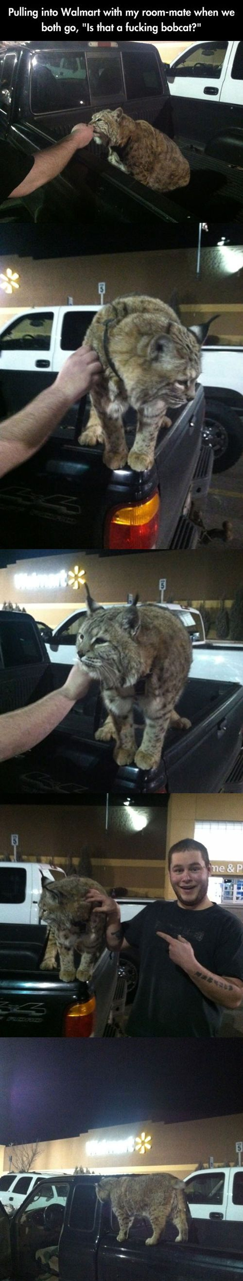 Walmart's native wildlife…