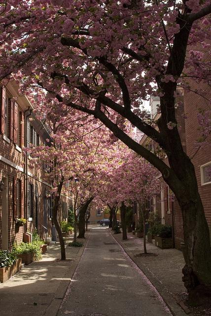 South Philly, (Philadelphia), Pennsylvania, USA