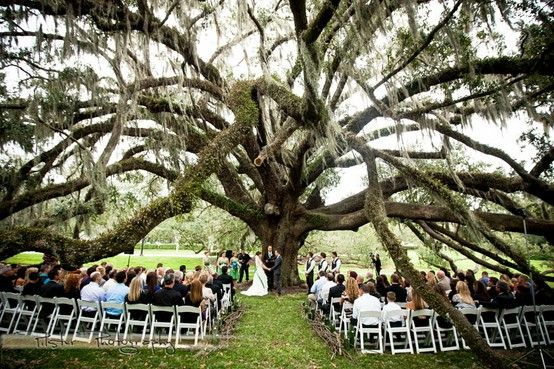 Old oak tree wedding ceremony at the Orlando Science Center