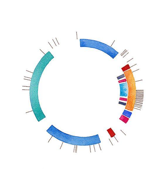 Plasmid22   Stampe darchivio Creato con gli inchiostri pigmentati darchivio su carta di Epson velvet fine art. Firmato a matita; firmato, titolato e datato sul retro. Senza cornice  Plasmidi sono probabilmente una delle mie cose preferite a dipingere. La semplicità del cerchio in combinazione con la complessità della genomica trovo seducente. Questo particolare pezzo è un dipinto di pGreen plasmide (plasmide 22 nella mia serie).  Mi spedirà questa voce in modo sicuro contro il bordo di pH…