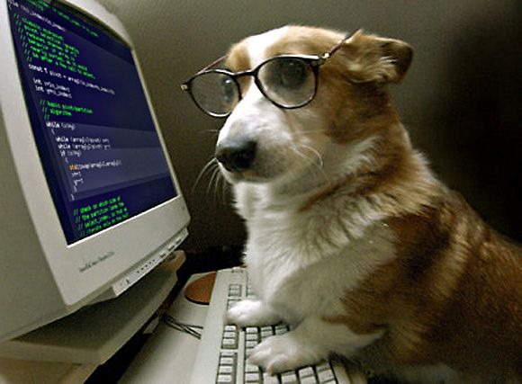 """Képtalálat a következőre: """"hacker dog"""""""