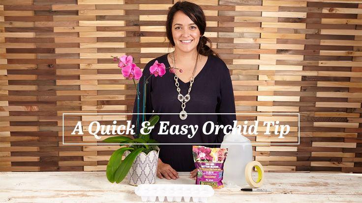 Orchideen Pflege-Tipps:Aus Wasser und Orchideendünger Eiswürfel herstellen. 1 x pro Woche einen Eiswürfel in den Orchideentopf geben.