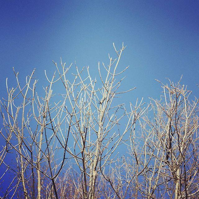 Cime boscose #invernopuòesserebello #montepetra