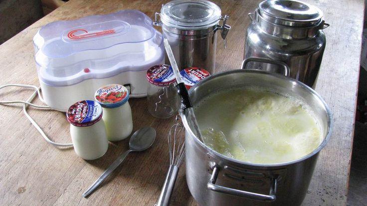 Jak se dělá domácí jogurt