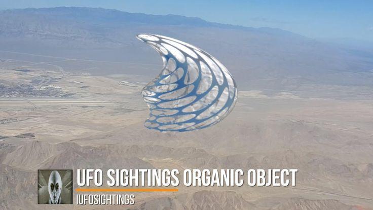 UFO Sightings Organic Object Multiple Witnesses November 2016
