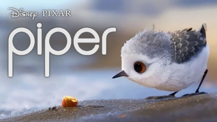 Piper Short Film by Disney Pixar