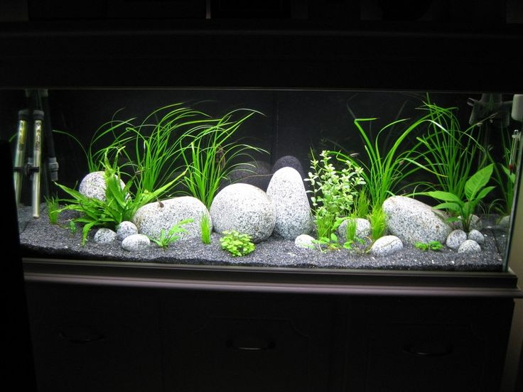 "6 foot x 2 foot x 30"" fish tank 