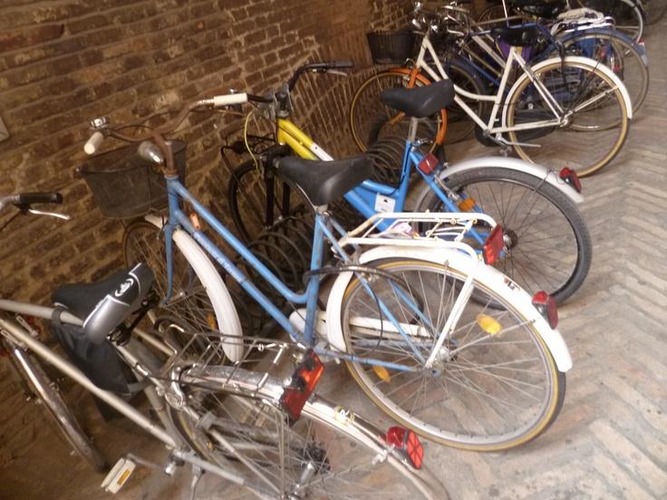 x bike ferrara - photo#15
