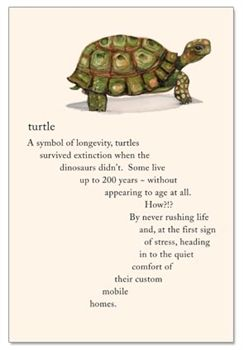 Here's to living the Turtle way! Happy Birthday Card