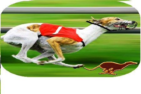 Dog racing betting rules in no limit what is parlay in sports betting