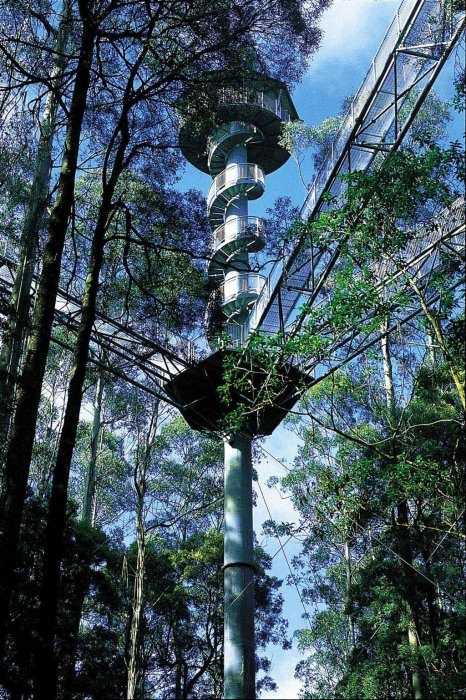 The Otway Fly Tree Top Adventures - near the Great Ocean Road [in Victoria]