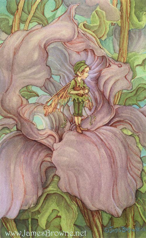 Iris Flower Fairy 8x10 Signed Print by brownieman on Etsy, $11.50