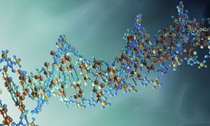 The team's work is the clearest sign yet that life experience can affect the genes of subsequent generations.