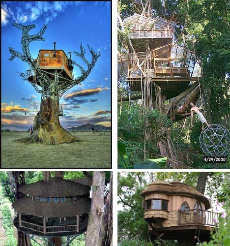 tree houses arent just for kids anymore here are 15 of the coolest tree houses in the world from a sq ft tree house to a suspended nest tree house