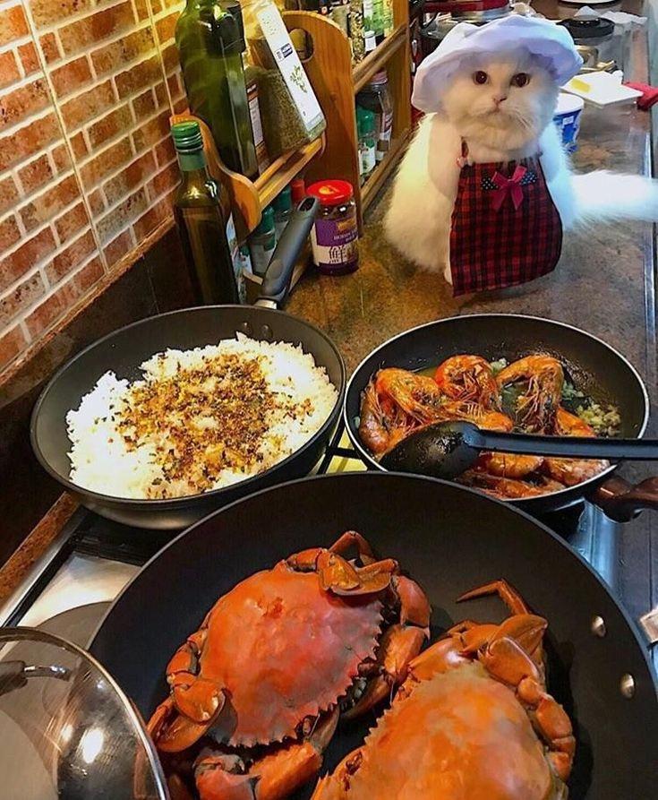 "#Cats  #Cat  #Kittens  #Kitten  #Kitty  #Pets  #Pet  #Meow  #Moe  #CuteCats  #CuteCat #CuteKittens #CuteKitten #MeowMoe      ""I help."" ...   https://www.meowmoe.com/58671/"