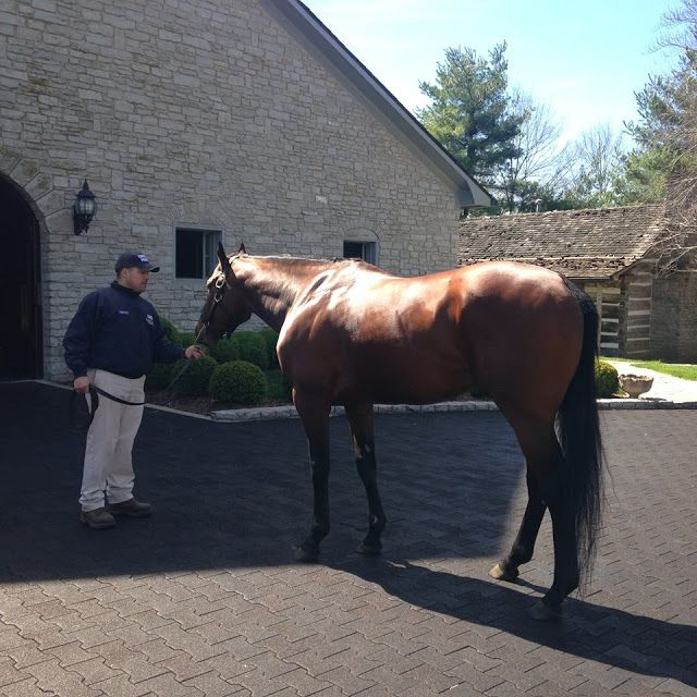 Horse Country Chic: American Pharaoh Love this beautiful boy!!!!!!!