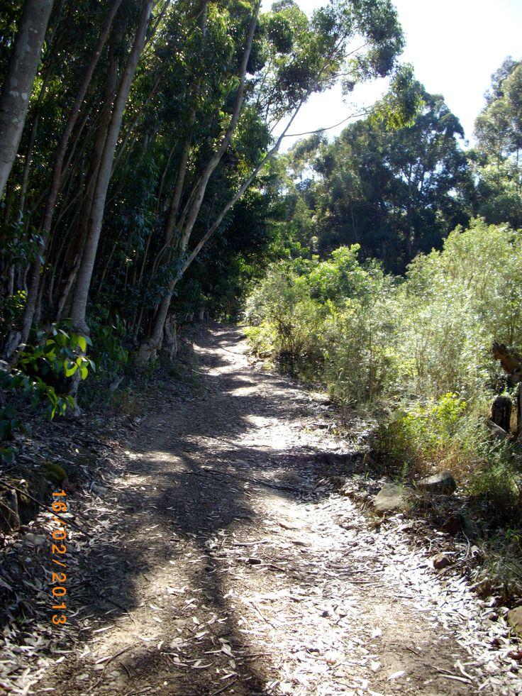 Road to Die Boshuisie