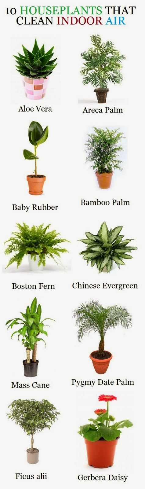 Aloe Vera - Not only can it be used for burns on the skin, it is also known to remove formaldahyde from the air. Areca Palm - General air purifier, especially as it grows larger. It's known for ...