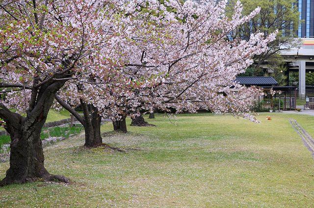 Los magníficos #jardines #japoneses de #Hamarikyu