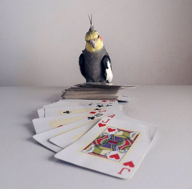 So you wanna play big two crayzee eights how bout go for How do you play go fish