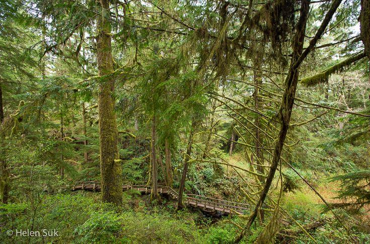 schooner cove, best hikes in bc, tofino hiking, hiking in tofino, tofino trails, hiking bc, rainforest trails tofino