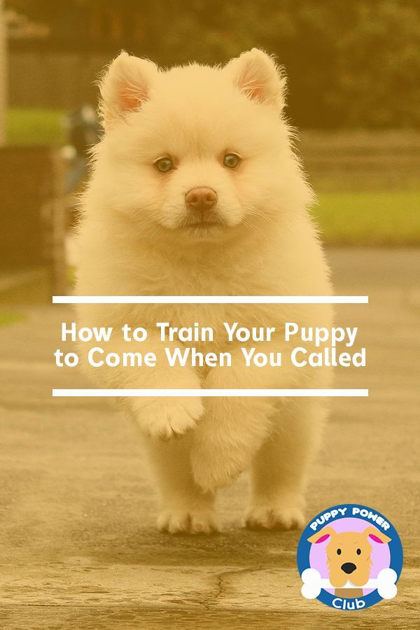 How To Train Your Puppy To Come When You Call Training Your