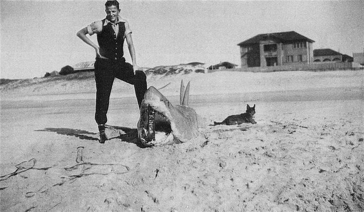 Jan believes this shark catch photo is from around the 1930s. (ABC Local: Arthur Hackett)